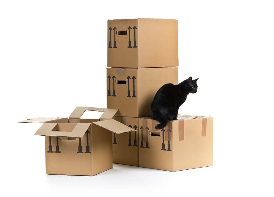 Prix approximatifs de déménagement: Coûts de déménagement moyens